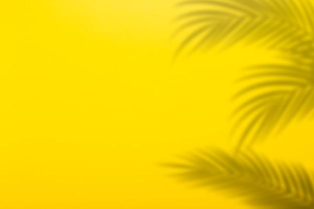 Ombra dalle foglie di palma su uno sfondo di un muro giallo. sfondo giallo, cartone. immagine astratta