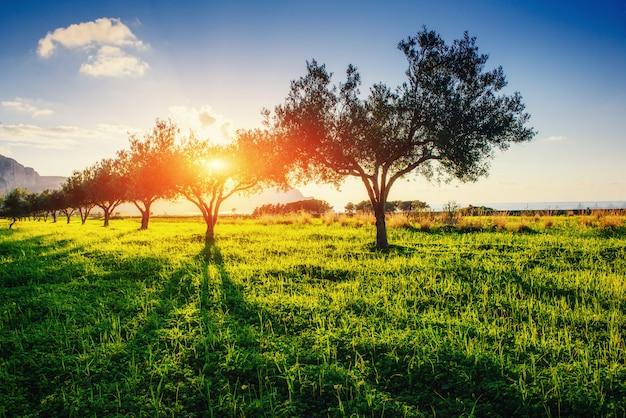 Ombra dell'albero con il tramonto. mondo della bellezza. sicilia. italia. europa