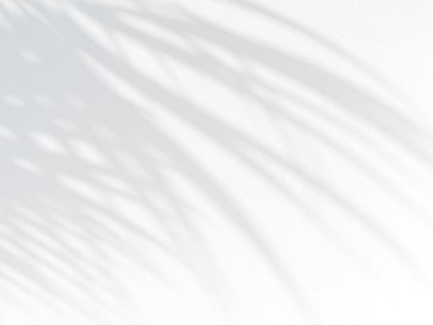 Ombra di foglia di palma su una parete