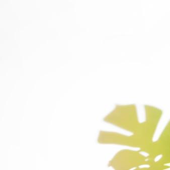 Ombra di foglie all'angolo di sfondo bianco