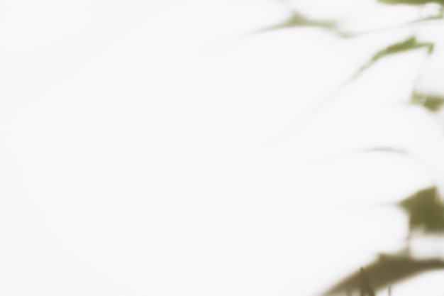 Ombra di foglie di palma naturale