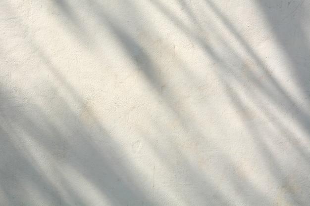 Ombra di rami e foglie su un muro bianco