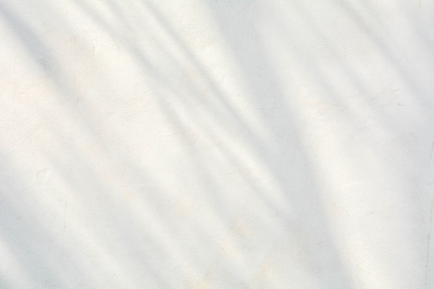Ombra di rami e foglie sul muro bianco crepa