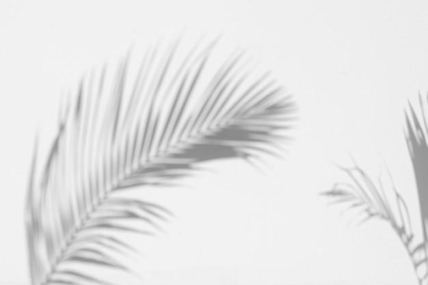 Ombra foglie di palma sul muro di cemento bianco
