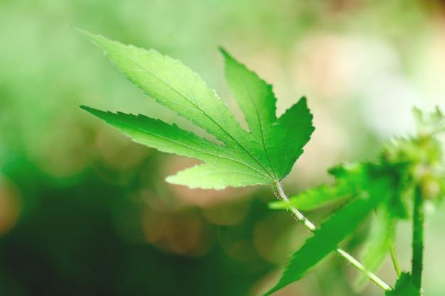 Ombra leggera di mattina dell'albero della pianta della foglia verde