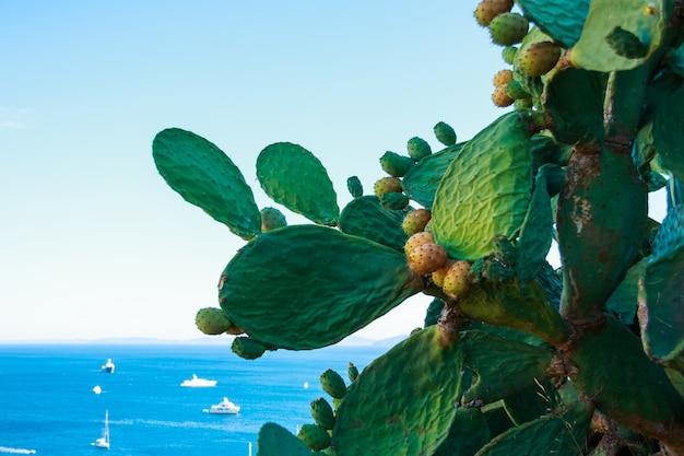 Opuntia del cactus con i fiori sulla priorità bassa blu del mare