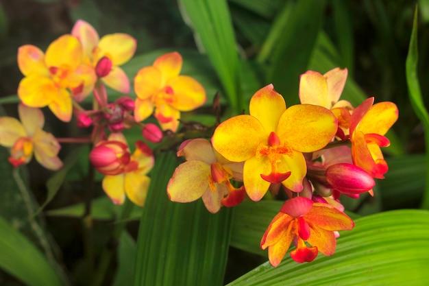 Orchidea a terra, colori vivaci nel giardino estivo.