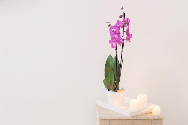 Orchidea e candele su fondo bianco