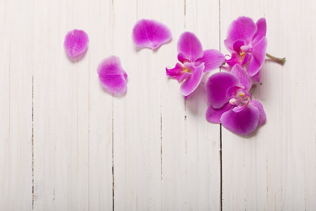 Orchidea su fondo di legno bianco