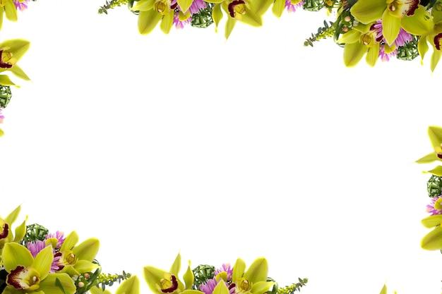 Orchidea verde del fiore tropicale su una priorità bassa bianca