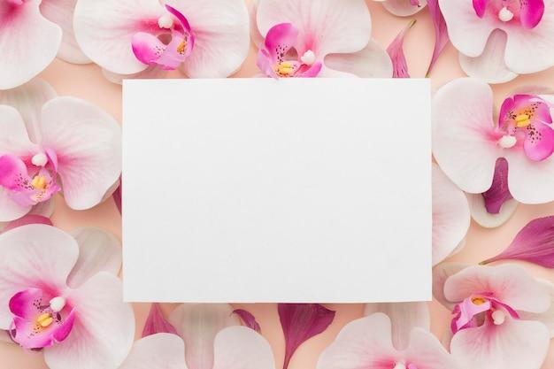 Orchidee distese piatte con rettangolo bianco