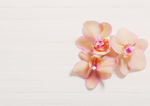 Orchidee su fondo di legno bianco
