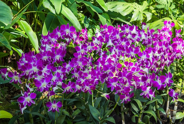 Orchidee viola con piante tropicali