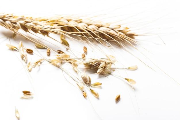 Orecchie del grano isolate su fondo bianco