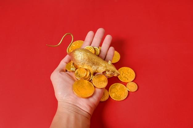 Oro di ratto e una pila di monete d'oro su una mano con uno sfondo rosso, felice anno nuovo cinese.