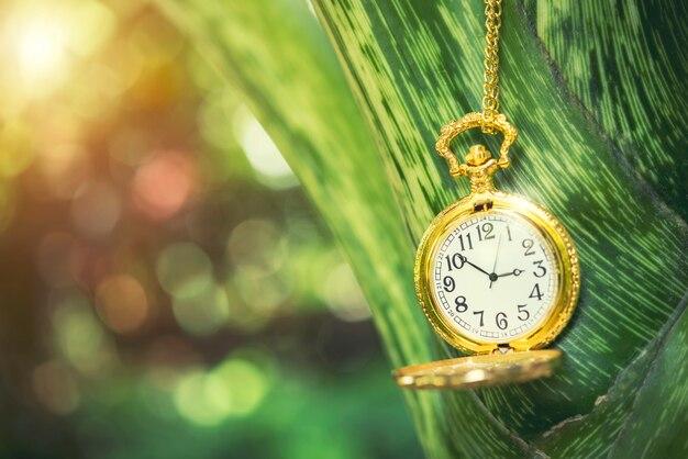 Orologio dorato del razzo del primo piano che appende sul ramo di albero. concetto di sfondo tempo