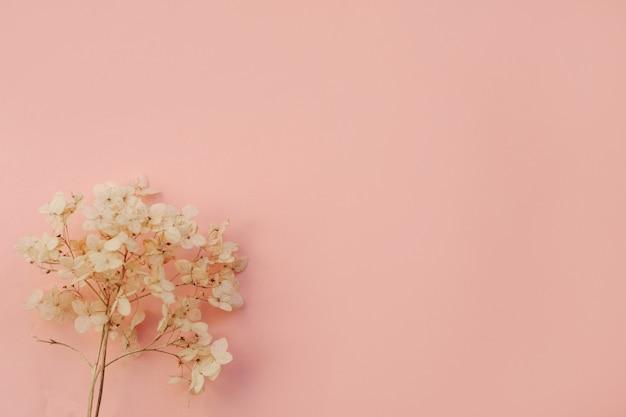 Ortensia fiori secchi su sfondo azzurro. copia spazio