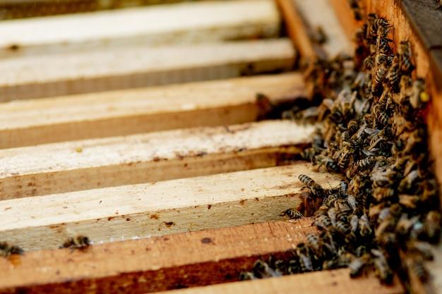 Orticaria che si prende cura delle api con favi e api. l'apicoltore ha aperto l'alveare per allestire una cornice vuota con cera per la raccolta del miele.