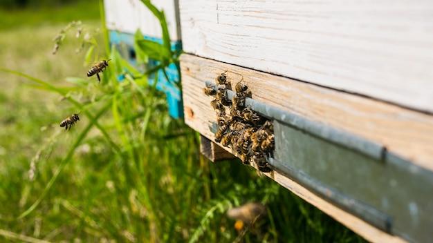 Orticaria in un apiario con api che volano verso le piattaforme di atterraggio in un giardino verde