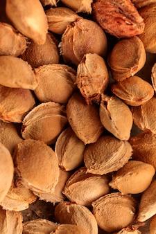 Ossa di albicocca. i semi sono stoppie per la semina. un seme di albicocca