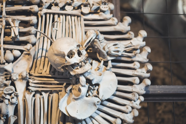 Ossa e teschi umani nell'ossario.