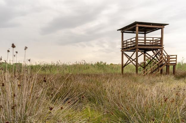 Osservatorio di uccelli sul campo