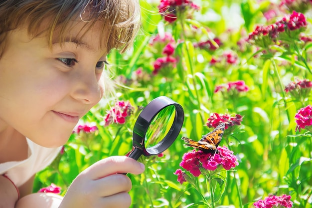 Osservi in una lente d'ingrandimento la farfalla si siede sui fiori. messa a fuoco selettiva.