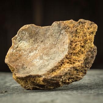 Osso pietrificato di un mammut. archeologia