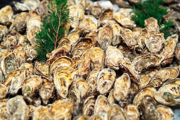 Ostriche in vendita al mercato del pesce bancarella del mercato del pesce pieno di ostriche fresche.