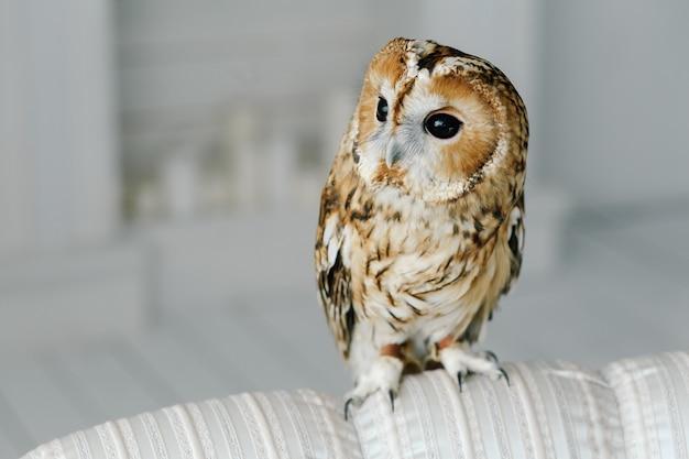 Owlet carino seduto su un divano
