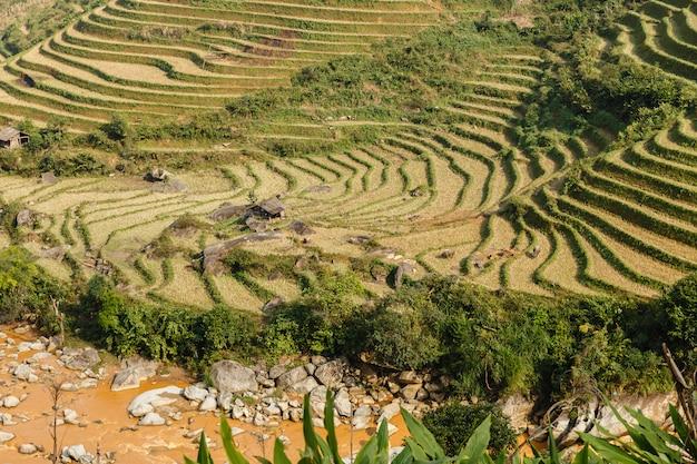 Paesaggio a terrazze del giacimento del riso vicino a sapa nel vietnam