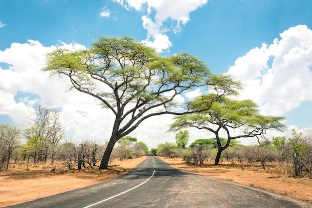Paesaggio africano con strada vuota e alberi nello zimbabwe