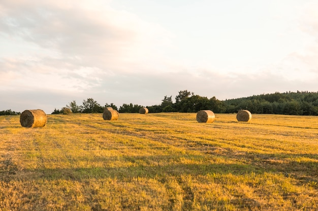 Paesaggio autunnale con campo secco