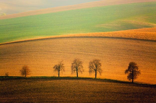 Paesaggio autunnale della moravia meridionale con cinque alberi e dolci colline ondulate