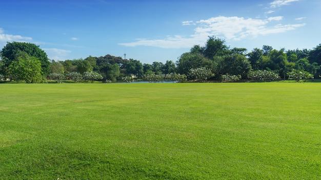 Paesaggio campo verde con sfondo albero