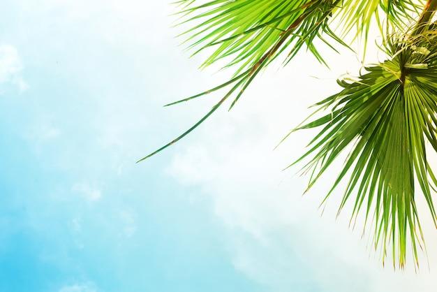 Paesaggio con alberi verdi e vecchia casa su un cielo blu