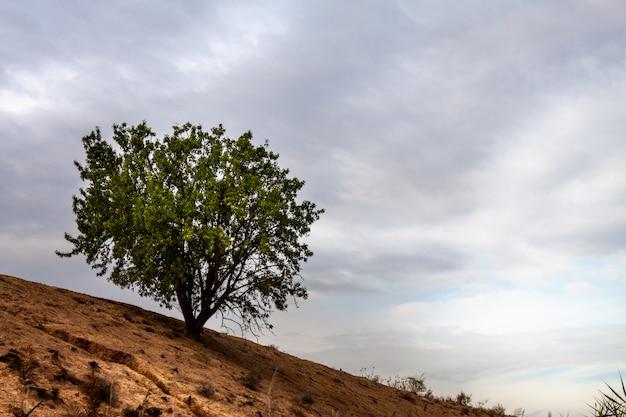 Paesaggio con albero isolato su una collina