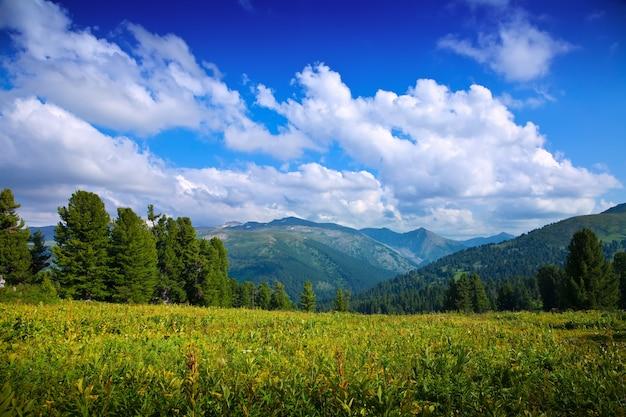 Paesaggio con le montagne della foresta