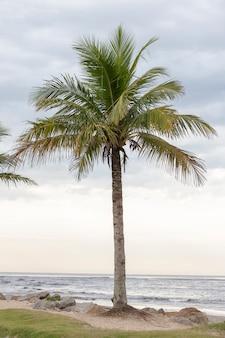 Paesaggio con palme evidenziate e la linea del mare sullo sfondo