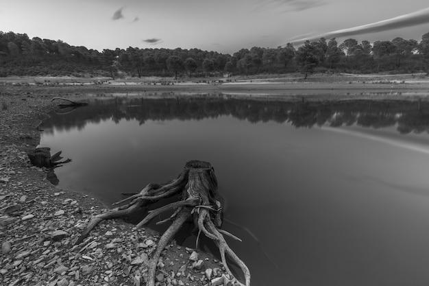 Paesaggio con radici secche in una palude.