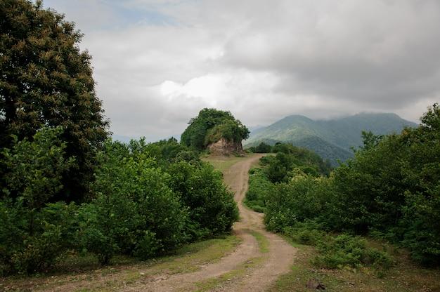 Paesaggio con strada di montagna in un bosco