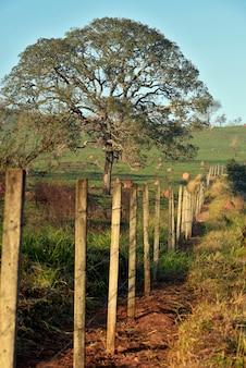 Paesaggio con strada, recinzione e albero nella luce del primo mattino. brasile.