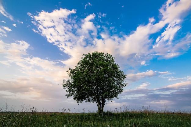 Paesaggio con un albero solitario in un campo con erba verde