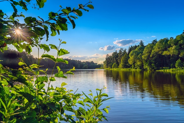 Paesaggio con un laghetto nel bosco, riflesso sull'acqua, sotto un cielo blu
