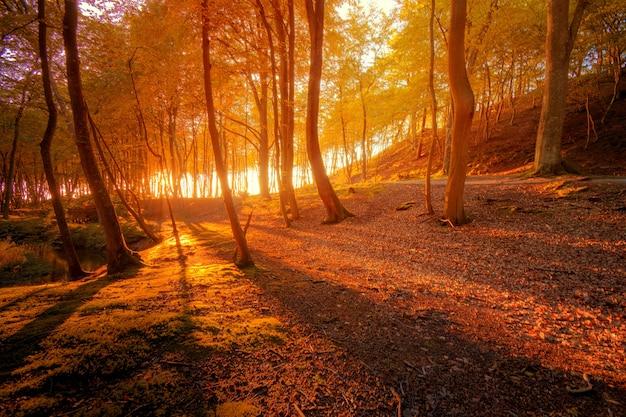 Paesaggio d'autunno.