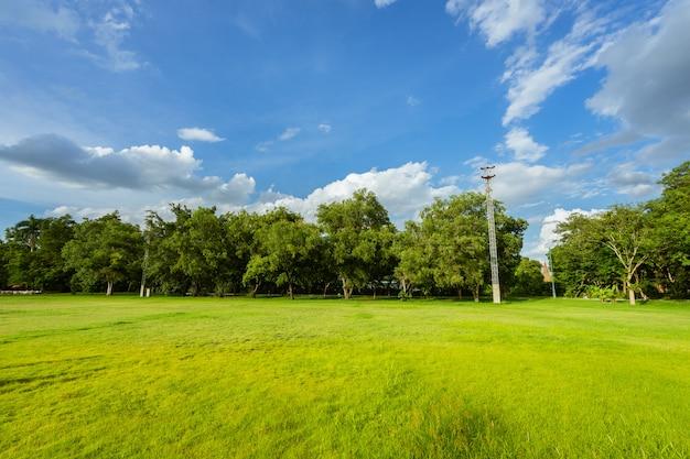 Paesaggio del campo di erba e del parco pubblico dell'ambiente verde