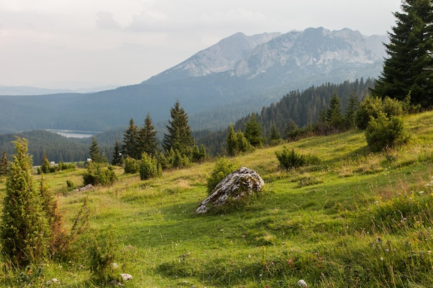 Paesaggio del prato di montagna illuminato dal sole della sera. parco nazionale del durmitor, montenegro.