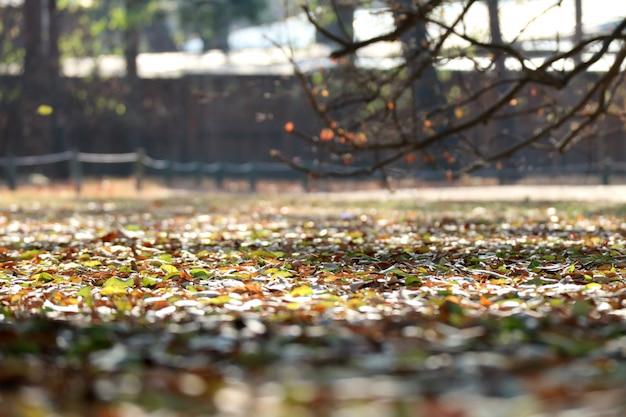 Paesaggio del tardo autunno