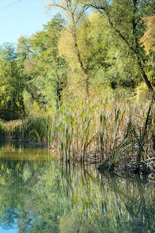 Paesaggio dell'acqua del lago foresta estate