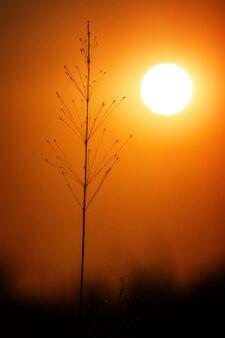 Paesaggio dell'erba alla luce meravigliosa di tramonto